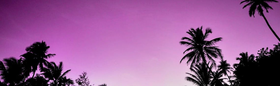 /resources/quick-sell/2019/0125/palm-tree-background.jpg